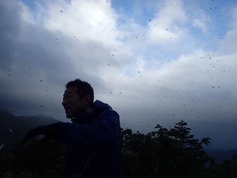 2015北方稜線kei (116)物凄い虫に囲まれて